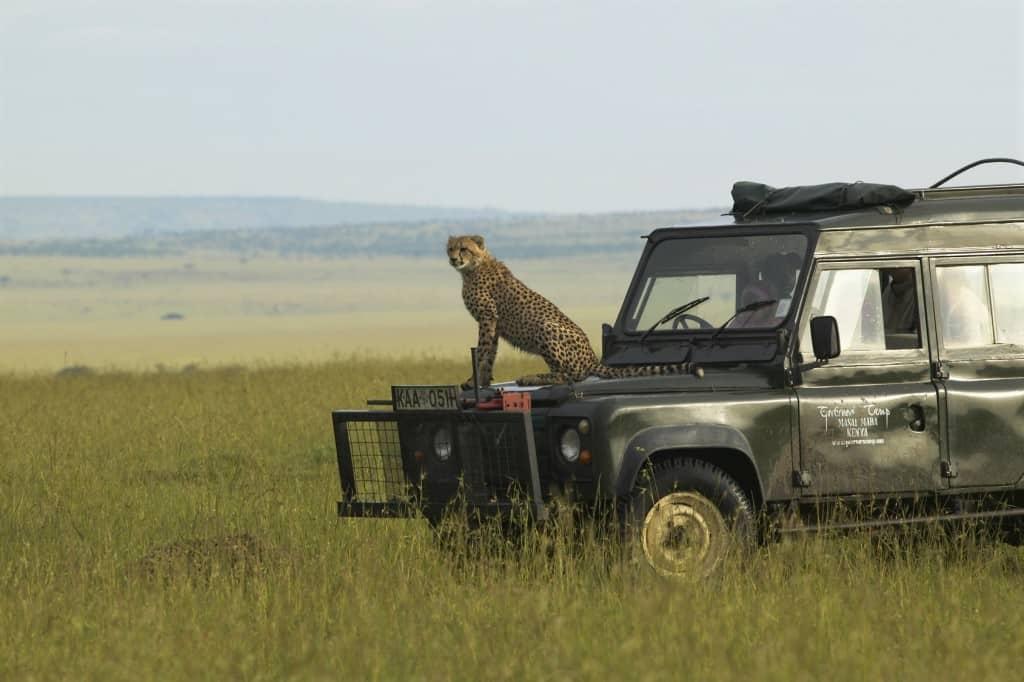 Going on safari holidays Kenya