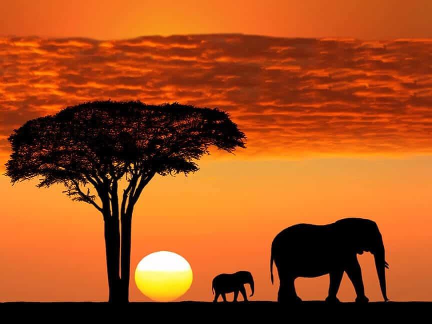Elephants Making Paintings