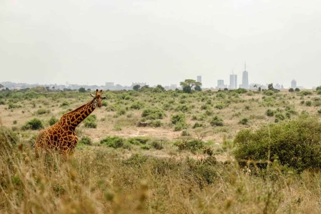 Some of the top things to do in Kenya