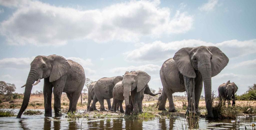 8 Reasons to Take Kenya Safari Holidays with Kids