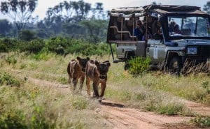 African safari tour in Kenya and Tanzania