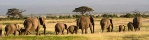 Visit Kenya's Elephant Sanctuary and Adopt an Elephant!