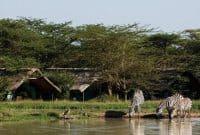 7 Days Kenya safari Amboseli, Lake Naivasha and Maasai Mara