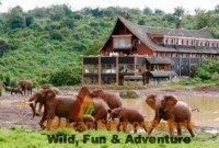 6 Days Kenya Safari Aberdares, Lake Nakuru and Masai Mara
