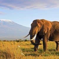 7 Days Kenya safari Amboseli, Lake Naivasha, Maasai Mara