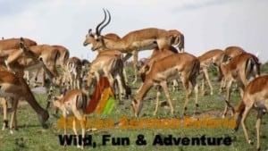7 Days Kenya safari Amboseli Lake Naivasha Maasai Mara