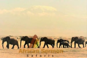 13 days kenya explorer tour: elephants-in-amboseli-national-park-against-the-back-from-of-mount-kilimanjaro