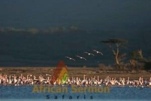 flamingos-at-lake-nakuru-safari-holiday-in-kenya