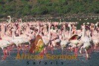 <p>Maasai Mara and Lake Nakuru Kenya Safari, 5 Days</p>