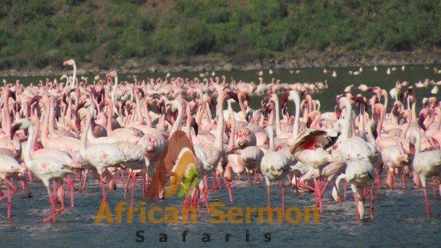 6 Days safari in Kenya: Maasai Mara and Lake Nakuru