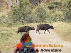 6 Days Kenya tour Mt. Longonot, Hell's Gate, Maasai Mara during Kenya safari holiday