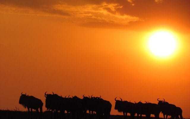 3-Days Maasai Mara Tour in Kenya – Masai Mara Safari