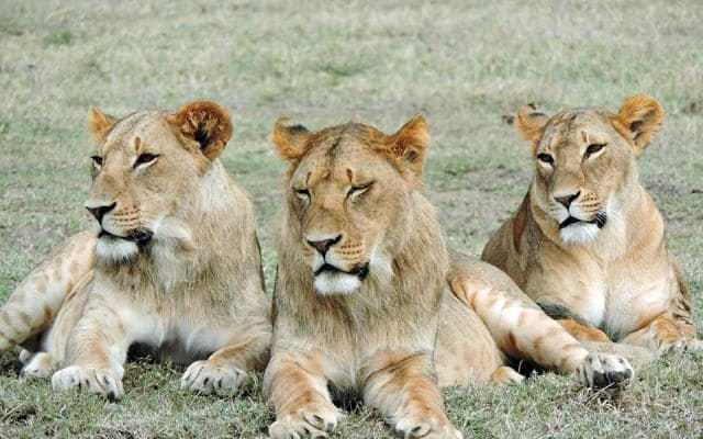 Safari in Kenya, Africa – General information
