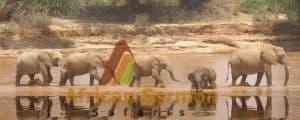 Masai-mara-safari-kenya, 7-Days-Kenya-safari-Amboseli-Lake-Naivasha-Maasai-Mara