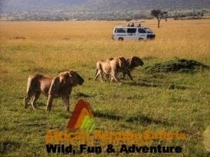 About us - African Sermon Safaris for safari in Masai Mara