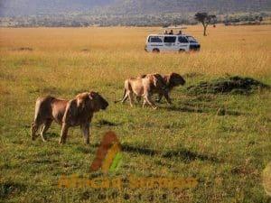 safari-in-masai-mara