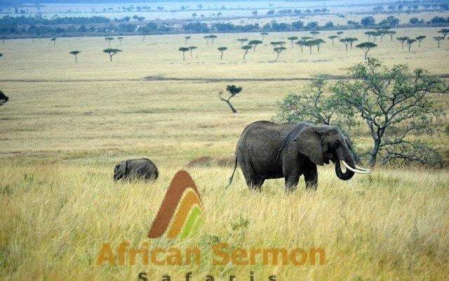 7-Days Kenya Explorer Safari