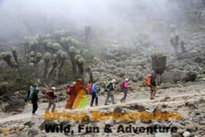 kilimanjaro marangu route climb