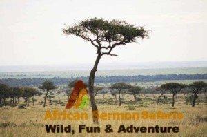 Maasai Mara Game Reserve in Kenya: Wildebeest migration
