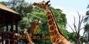 giraffe-center-in-nairobi