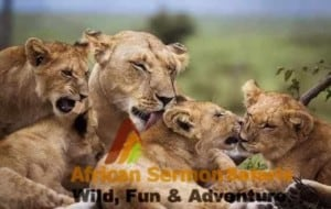 Kenya safari destinations and safari parks