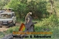 Kenya Safari Booking Terms and Conditions