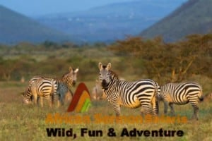 11 days kenya tanzania combined tour and safari