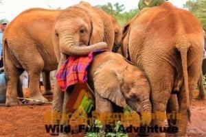 Nairobi day tour at Sheldrick Baby Elephant Orphanage