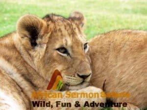 Tanzania safaris tour